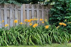 "Genus: Hemerocallis varieties Zones: 3 to 9 Cost: From $4 Expert says: ""Daylilies are gorgeous and easy to divide. You can build a fine collection of colors and shapes by acquiring a few plants each year."" —Barbara Damrosch, farmer and author, Harborside, Maine   - CountryLiving.com"