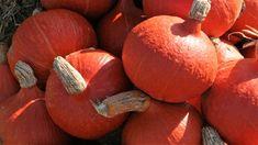 10 pravidel, jak správně pěstovat dýně hokaido, vhodné odrůdy dýně hokaido. Nejlepší recepty z dýně Hokkaido. Jak a proč dýně pomáhají zdraví Pumpkin, Vegetables, Food, Hokkaido, Pumpkins, Essen, Vegetable Recipes, Meals, Squash