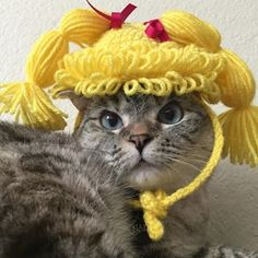 She loves playing dress up, too! | 24 Reasons You Seriously Need To Follow Nala The Cat On Instagram