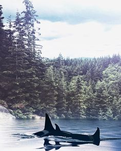 B L A C K F I S H — This Enlight app is incredible. The whales were...