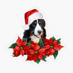 Poinsettia Flower, Blossom Flower, Santa Hat, Stickers, Dogs, Flowers, Bernese Mountain, Designs, Art