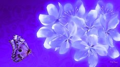 Twilight Blossoms Beauty Butterfly Flowers Purple Blue Lilac Blooms Lavender Cool Wallpapers