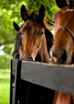 Kentucky Thoroughbred Horse Photo Blank Card by ammfoto on Etsy, $3.00