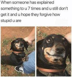 Please forgive how stupid I am Animals animal meme funny dog haha