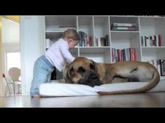 Gentle Great Dane gets hug from baby (VIDEO) » DogHeirs | Where Dogs Are Family « Keywords: Great Dane, Baby, hug