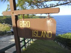 Bird island Saipan Island, Northern Mariana Islands, Pacific Ocean, Bird, Outdoor Decor, Travel, Viajes, Birds, Destinations