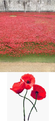 Tower of London remembers the centenary of World War I. Leonard Rimell (my great grandfather) born 9 May 1884, Hampstead, England. Died 24 Jun 1918 France. Sapper, Corps of Royal Engineers, Welsh Army Corps. Brother Alfred Rimell born 1 Oct 1886, Hampstead, England. Died 14 July 1916 France, Battle of the Somme. Sergeant Royal Fusiliers, City of London Regiment. Brother Edward Rimell born 9 Dec 1888, Hampstead, England. Died 16 Jun 1916 France. Private in the 3rd Coldstream Guards. Katrina©B