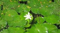 Una mini blanca entre tanto verde (Un estanque en el Valle de Antòn)
