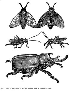 antique insect - Google Search