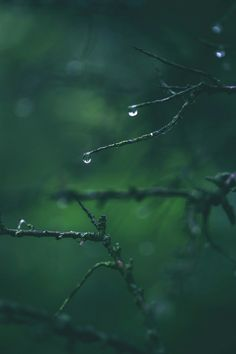 Mystical - dennybitte: rainy day hike in the woods by. Dark Green Aesthetic, Nature Aesthetic, Macro Photography, Levitation Photography, Winter Photography, Abstract Photography, Beach Photography, Slytherin Aesthetic, Dark Forest