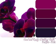 Color Scheme: Plums, Purples, and Navy