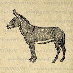 Donkey Graphic Digital Printable Horse Image Download Illustration Vintage Clip Art Jpg Png Eps 18x18 HQ 300dpi No.3090 @ vintageretroantique.etsy.com