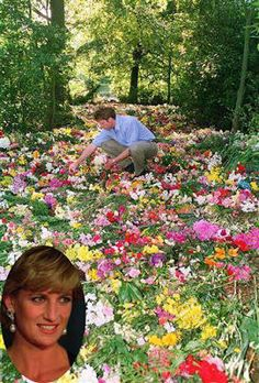"Beneath some of the millions of flowers left for Diana, lays our ""Queen Of Hearts"" the irreplaceable Diana. Earl Spencer places more flowers."