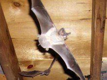 #AnimalsGetOut (226)600-5597 bat-traps