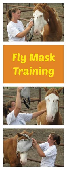 Training Your Horse to Wear a Fly Mask Dog Boarding Near Me, Horse Mask, Horse Exercises, Dog Attack, Horse Grooming, Veterinary Care, Horse World, Horse Tips, Positive Reinforcement