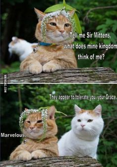These cats crack me up every time.