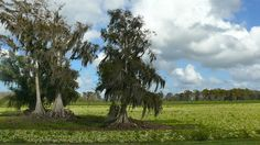 Around Lake Okeechobee, Florida