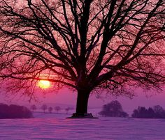 Warm pink sunset on a winter's day