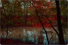 #EssenReisenLeben #Herbst #Autunno #Autumnc #Berlin #Rehberge