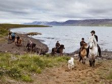 Riding tour in Skjaldarvik - Akureyri - Iceland, beautiful surrounding and very nice horses - welcome to come and try :) Tours In Iceland, Iceland Travel, Icelandic Horse, Back Road, Trek, Horses, Gallery, Animals, Beautiful