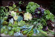 12 Succulent cuttings 12 unique varieties mix fresh from my garden cactus succulents plants on Etsy, $21.50