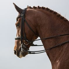 Hunter jumper eventing horse equine grand prix dressage equestrian fox hunt hunting Pretty Horses, Beautiful Horses, Dressage, Poney Welsh, Types Of Animals, Fox Hunting, Hunter Jumper, Horse Photography, Adorable Animals