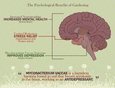 Gardening The Wonderdrug - The Mental Benefits of Gardening