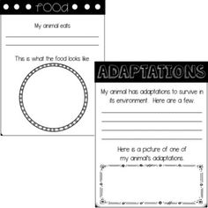 Animal Report Template Example Animal Report Template Freebie By First  Grade Roars