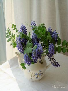 Purple muscari in pitcher