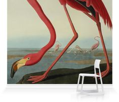 Murals of Greater Flamingo, Phownicopterus Ruber by Natural History Museum (3000mm x 2400mm) | Shop | Surface View