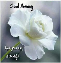 Good Morning Happy Tuesday Hope Your Day Is Beautiful good morning tuesday tuesday quotes good morning quotes happy tuesday good morning tuesday beautiful tuesday quotes tuesday quotes for friends tuesday quotes for family Good Morning Tuesday, Good Morning Happy, Good Morning Flowers, Good Morning Sunshine, Good Morning Picture, Good Morning Friends, Good Morning Messages, Morning Pictures, Good Morning Wishes