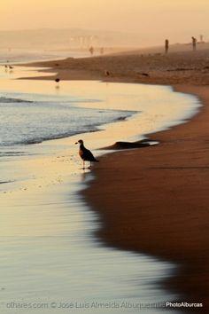 Pensamentos de uma gaivota