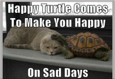 i love turtles and cats! perfect!
