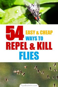 Find out how to keep flies away in a natural way. With 54 ways to repel and kill houseflies, mosquitoes, and gnats. Includes natural DIY fly repellant recipes and plants that repel flies naturally from food and dogs. Homemade Fly Repellant, Fly Repellant For Dogs, Flies Repellent Outdoor, Natural Fly Repellant, Insect Repellent, Keep Flies Away, Get Rid Of Flies, How To Repel Flies, Flowers