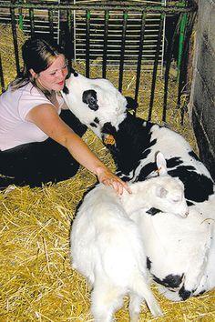 Aux portes de l'Ile-de-France, faites découvrir la traite des vaches à vos enfants ! Elevage La Doudou à Cheptainville (Essonne / 91) #ferme #nature #animaux #famille #balade #BaLaDO