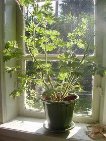 Elins Stuga: Min bror och svägerska bjuder in oss i sitt torp - pins Window Sill, Family Life, Finland, Cottage, Windows, Plants, Blogg, House, Home