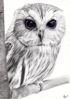 This drawing of an owl was the birthday present for my brother's girlfriend. Owls are her favorite animals and purple is her favorite color, so I included this color in the eyes. Owl Tattoo Drawings, Bird Drawings, Animal Drawings, Cute Owl Drawing, Owl Quilts, Baby Quilts, Owl Sketch, Scratchboard Art, Beautiful Owl