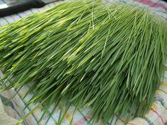luv my wheatgrass