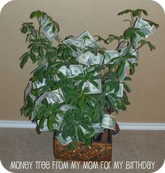Birthday gift for a teen. The next time they ask for more money, just tell them to go get it from the money tree. ;-)