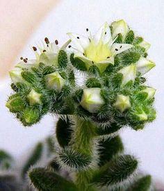 Pequeno Cactus -