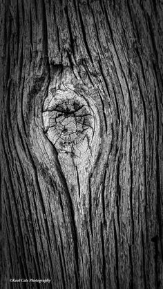 a tree blemish found on most trees. Cartoon Sketches, Wooden Textures, A Level Art, Wood Tree, Tree Photography, Tree Bark, Pen Art, Colorful Wallpaper, Typography Inspiration