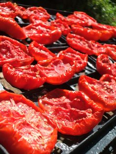 By Bonnie L. Grant Sun dried tomatoes have a unique sweet taste and can last far longer than fresh tomatoes. Knowing how to sun dry tomatoes will help you preserve your summer harvest and enjoy the fruit well into winter. Drying tomatoes doesn't change any of the nutritional benefits of the fruit with the exception…