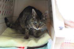 里親さんブログ若返りましょう! - http://iyaiyahajimeru.jp/cat/archives/66173