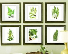 "Set of BOTANICAL Prints set, Fern Prints Set of 6 Prints 8x10"", Leaf Prints, Vintage Botanical Art Botanical wall art Gnosis Picture Archive"