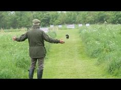 Shooting Times & Skinners: Gundog training part 6 - YouTube