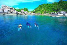 Un tour de snorkel alrededor de Koh Tao es perfecto para los visitantes que están limitados en  tiempo y que quieren experimentar la increíble y diversa vida marina que ofrece la isla Reef Shark, Water Pictures, Pub Crawl, Beach Bars, Colorful Fish, Koh Tao, Underwater Photography, Beautiful Islands, Marine Life