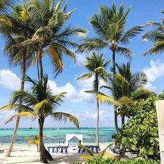 #destinationsocial #dominican #bavarobeach #puntacana #wedding #dreamwedding #honeymoon #travel #traveler #travelerslife #worldtravelerslife #beachwedding #palmtrees #beautifuldestination #vacation
