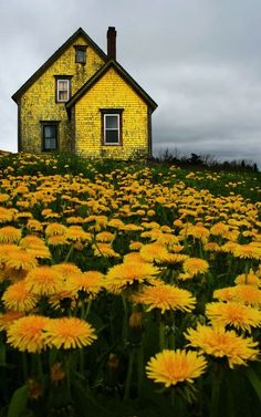 This little yellow house looks a bit ominous, even though it's in a field of yellow flowers, and it's basic shape and style are pleasing. Is it the cloudy dark sky? The angle of the photo? Would it feel different on a sunny day with a bright blue sky?
