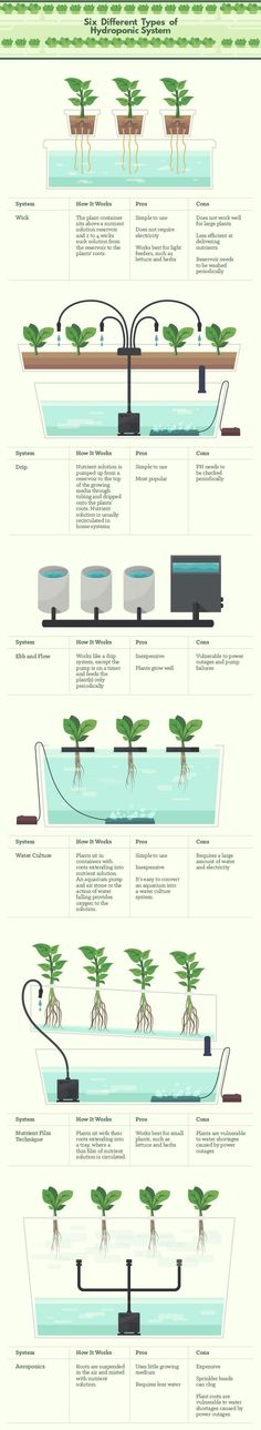 Six Different Types of Hydroponics #hydroponicgardening