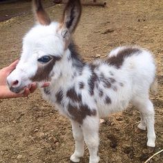 Adorable Tiny Donkey Pics That Prove They Deserve More Attention The Animals, Wild Animals Pictures, Cute Animal Photos, Cute Baby Animals, Animal Pictures, Funny Animals, Cute Kittens, Small Kittens, Cats And Kittens